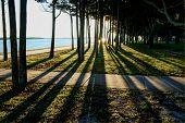 Shadows Through Trees