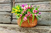 A big basket full of fresh colorful tulips outdoors