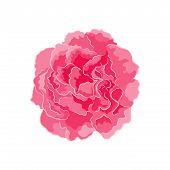 Rose Pink Separate Vector