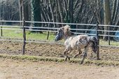 A Pony Galloping In The Sun
