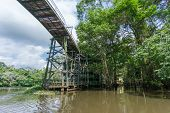 Amazon forest and wooden bridge built for anaconda film