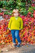 picture of pullovers  - Autumn portrait of adorable toddler boy wearing green pullover - JPG