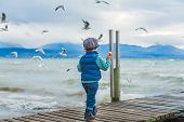 Adorable toddler boy feeding birds on a cold weather, back view