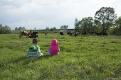 stock photo of herd  - Spring meadow little boy and girl herding cows - JPG