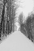 Wintry tree lined avenue covered in snow, Iceland.