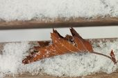 autumn leaf on the wooden snow covered bench