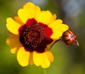 Baby Wasp