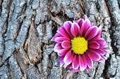 Pink flower on tree bark