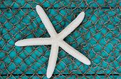 White starfish on fish net texture background