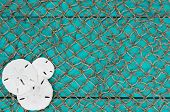 Sand dollar collage with fish net texture background