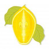 Half A Lemon Cut Along Vector