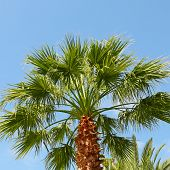 Tropical Palm On Background Of Blue Sky
