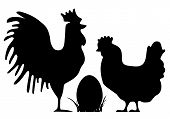 Easter chickens silhouettes