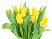 bouquet of  yellow  tulip flowers