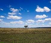 Single tree in empty field with blue sky and clouds.