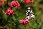 Shine Butterfly