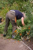 Gardener At Work 01
