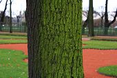 The moss on the bark