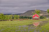 picture of flood-lights  - Red barn reflected in a flooded pasture in morning light with cattle in the background and a little black bird in the foreground - JPG