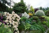foto of conifers  - Beautiful spring garden design with flowering rhododendron and conifers - JPG