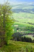 picture of tree house  - landscape consisting of a green tall tree on the grassy valley on the foreground and Carpathians mountains with green trees fir - JPG