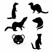 stock photo of ermine  - Ermine set of silhouettes vector - JPG