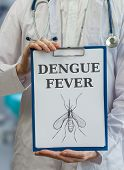 pic of mosquito  - Doctor is warning against dengue fever caused by mosquito - JPG