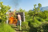 image of prunes  - Farmer burning pruning waste inside a concrete structuro on his lemon tree plantation - JPG