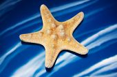picture of echinoderms  - closeup of a seastar in blue background with waves - JPG