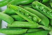 stock photo of sweet pea  - Freshly picked sweet green peas - JPG
