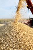 stock photo of auger  - Grain auger of combine pouring soy bean into tractor trailer blur motion - JPG