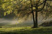 Foggy Spring Morning