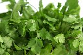 coriander close up