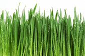 Grass With Water