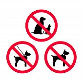 No Dogs, No Pets, No Leash Dogs, No Free Dogs Red Prohibition Sign. Pets Not Allowed. poster
