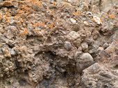 Conglomerate of sedimentary deposit plus lichens
