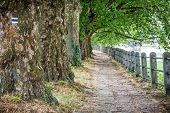 Alley Of Sycamore Trees And Railing, Piestany, Slovakia. Footpath Scene. Travel Destination. poster