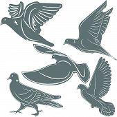 Pombos, um símbolo do pássaro, a ilustração