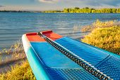 stand up paddleboard with a safety leash on a lake shore in Colorado (Boyd Lake State Park), summer  poster
