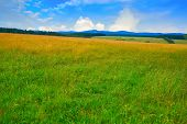 Agriculture green meadow in the Harz forest of Germany poster