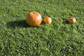 Large Orange Pumpkin With Two Smaller Pumpkins