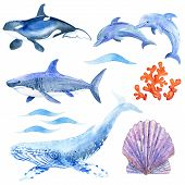 Sea Set Watercolor Raster: Dolphin,  Shark, Whale, Killer Whale, Coral, Wave, Shell  Animals Underwa poster