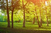 Spring Park Landscape, Colorful Spring Park In Sunny Weather At Spring Sunset poster