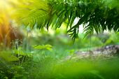 Fern Growing in summer garden. Beautiful  Green fern Leaves over blurred green bokeh background outd poster