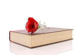 picture of smut  - Romance Novel Concept with Rose on Book against white background - JPG
