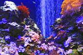 Beautiful Marine Aquarium With Fishes And Corals. Sea Life Under Water. Seabed With Coral And Algae. poster
