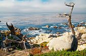 Ocean Shore With Rocks And Trees. Carmel, Ca.