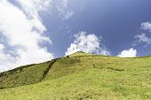 Pastures On A Beautiful Summer Day On Pico Island In The Azores, Portugal. poster