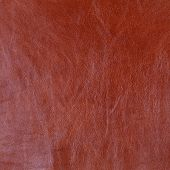 Genuine Light Brown Cattle Leather Texture Background. Macro Photo poster