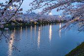 Hirosaki Park Cherry Blossoms Matsuri Festival In Springtime Season. Beauty Full Bloom Pink Sakura F poster